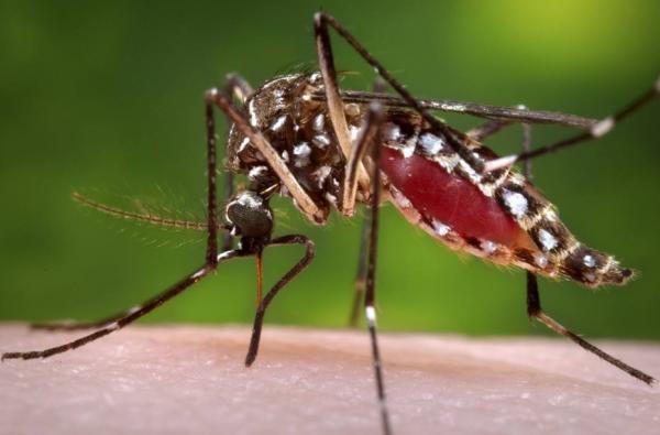 No período das chuvas, população deve redobrar os cuidados para combater a dengue