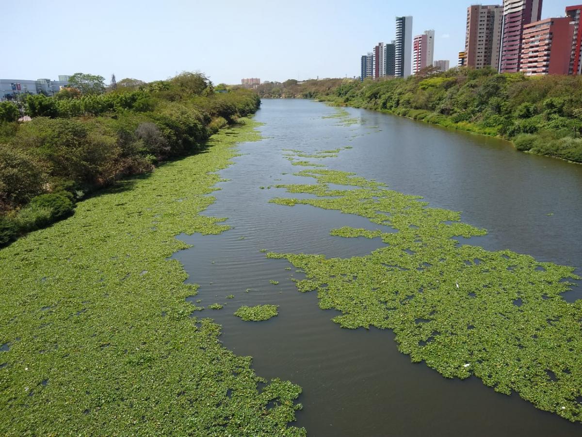 Secretaria de Meio Ambiente fiscaliza trabalho de retirada de aguapés do leito do rio Poti