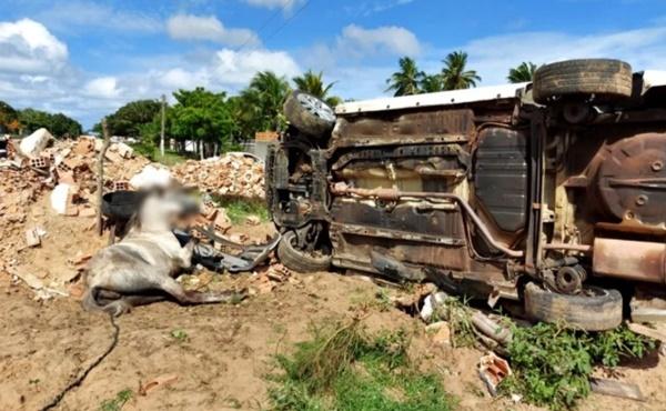 Motorista capota carro e atinge dois cavalos na cidade de Parnaíba