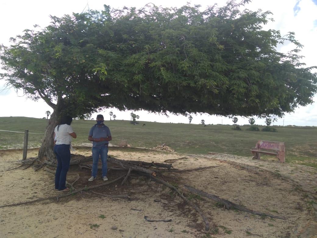 Secretário lamenta vandalismo na árvore penteada no Litoral do Piauí