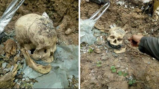 Crânio é encontrado em terreno baldio no Norte do Piauí