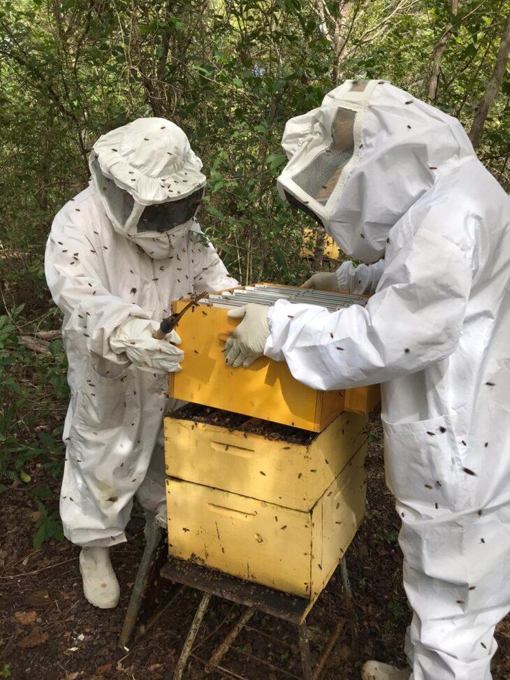 Piauí se destaca como maior exportador de mel do País