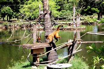 PPP vai transformar Zoobotânico do Piauí em bioparque