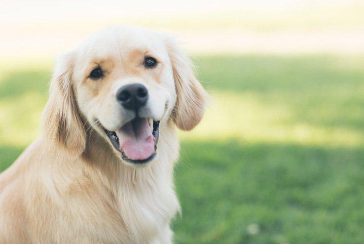 THE: Projeto que obriga uso de focinheiras em cachorros gera polêmica