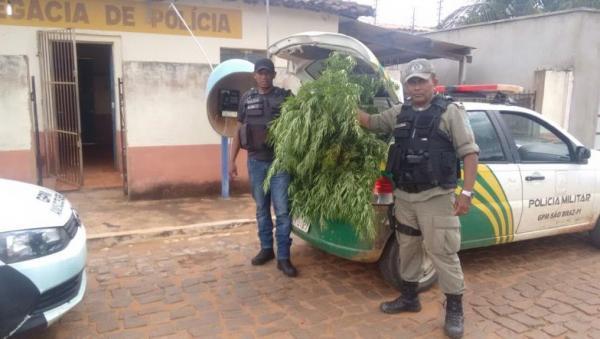 Agricultor é preso com pés de maconha em roça no Piauí e diz que 'erva era pra fazer chá'