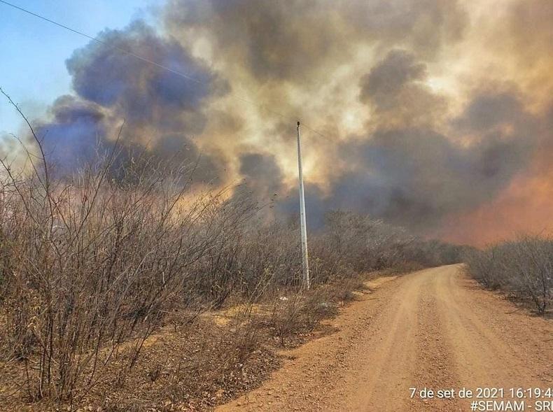 Fogo: Piauí registra 85 cidades com queimadas