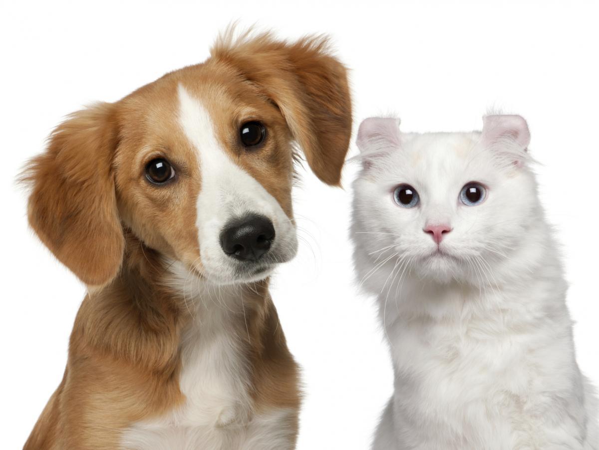 Automedicação pode causar graves danos ao pet's