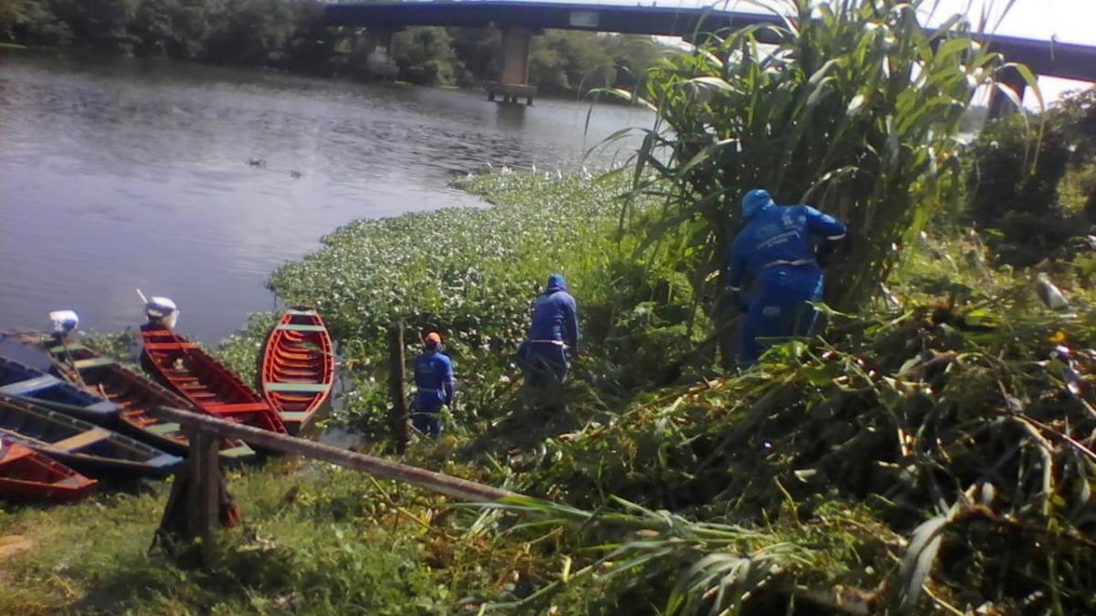 Equipes de limpeza iniciam retirada de aguapés do Rio Poti de forma emergencial