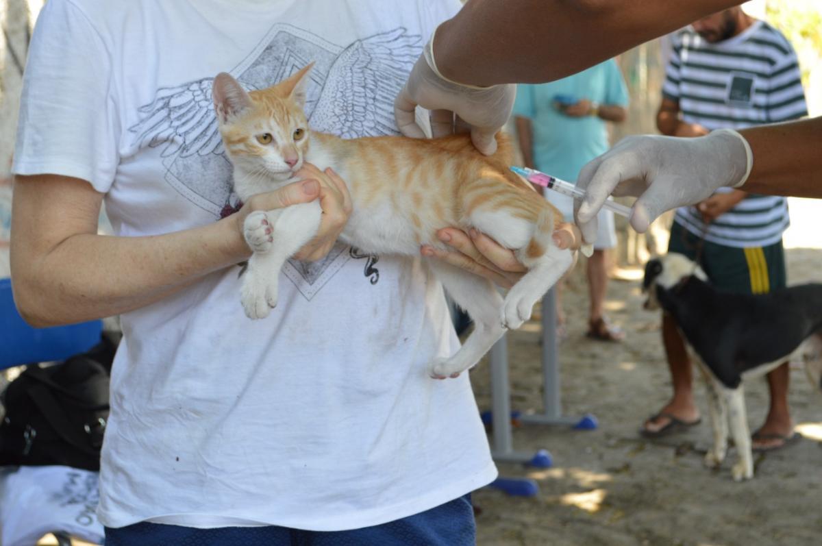 Campanha de vacinação contra a raiva começa no dia 30 de outubro em Teresina