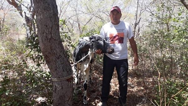 Adolescentes são apreendidos após roubarem 'vacas' em fazenda no Piauí