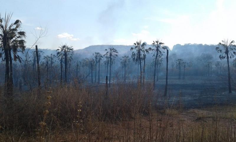 Incêndio florestal atinge comunidades de Picos e Sussuapara