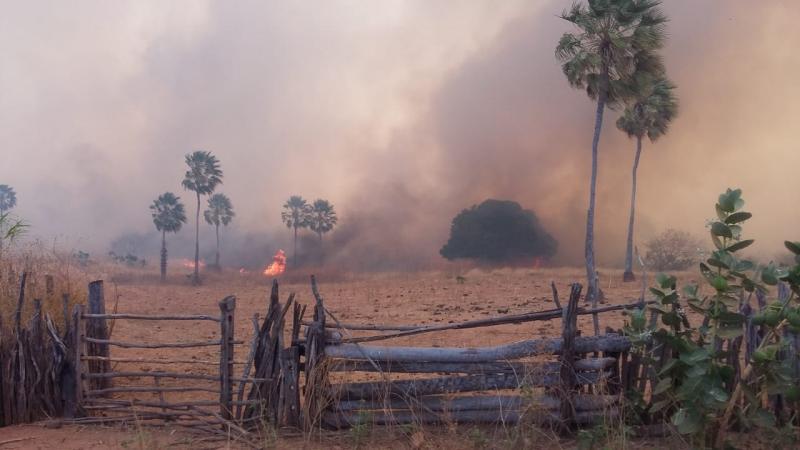 Incêndio atinge plantações e mata animais na região de Santa Cruz do Piauí