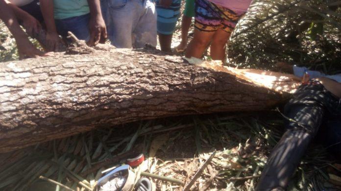 Homem morre após galho de árvore cair sobre ele na zona Rural de União