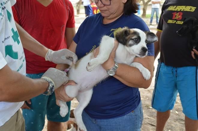 Vacinação em cães e gatos ocorre nas zonas Sul e Sudeste de Teresina neste sábado