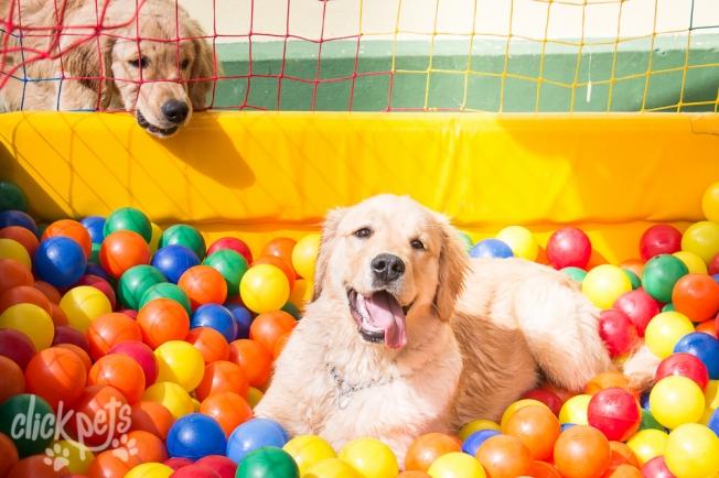 Feira Pet atrai cães e gatos para os dois de programação do Vem Pro Parque