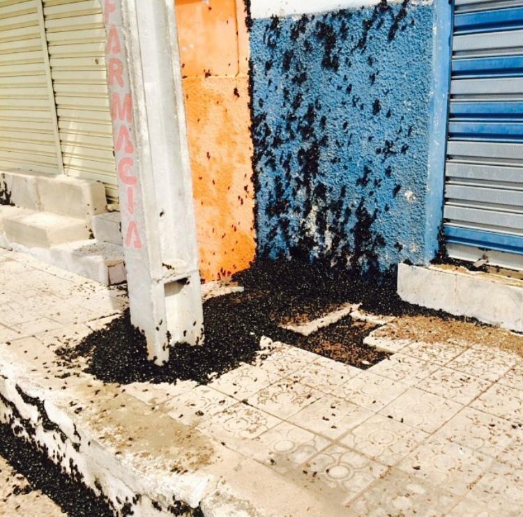 'Invasão' de besouros assusta moradores em São Raimundo Nonato