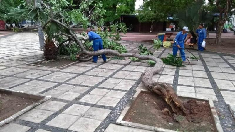 Chuvas no fim de semana provoca queda de árvores em Teresina