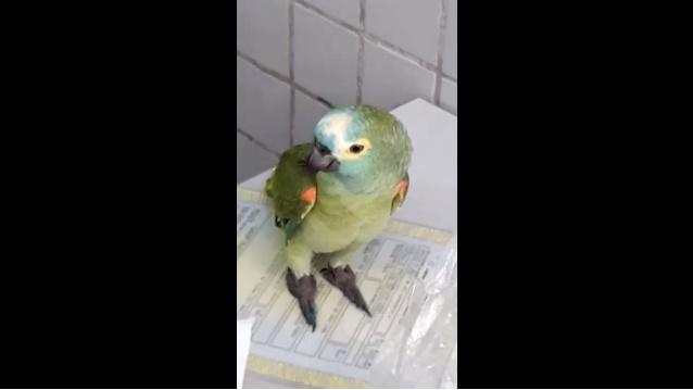 Papagaio é detido pela polícia ao tentar impedir prisão de dois traficantes em Teresina