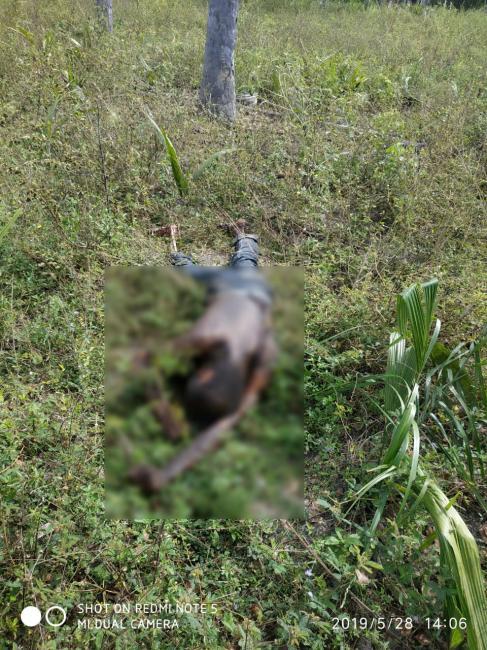 Corpo de homem 'queimado' é encontrado em matagal no Piauí
