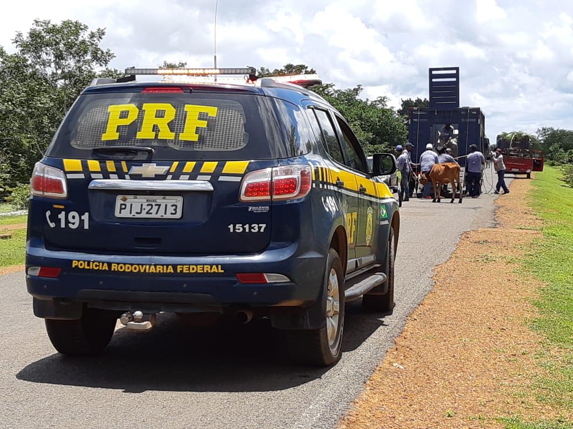 PRF inicia nova fase de operação para apreensão de animais no Piauí