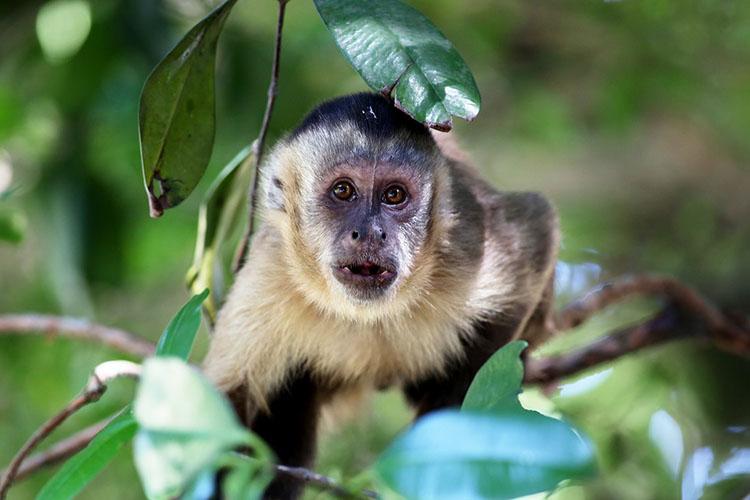 Ferramentas feitas por macacos há 3 mil anos são encontradas no Piauí