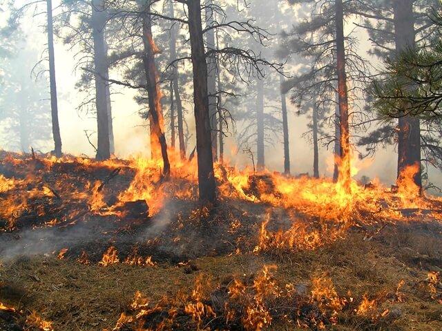 Defesa Civil de Teresina monitora áreas com risco de incêndios