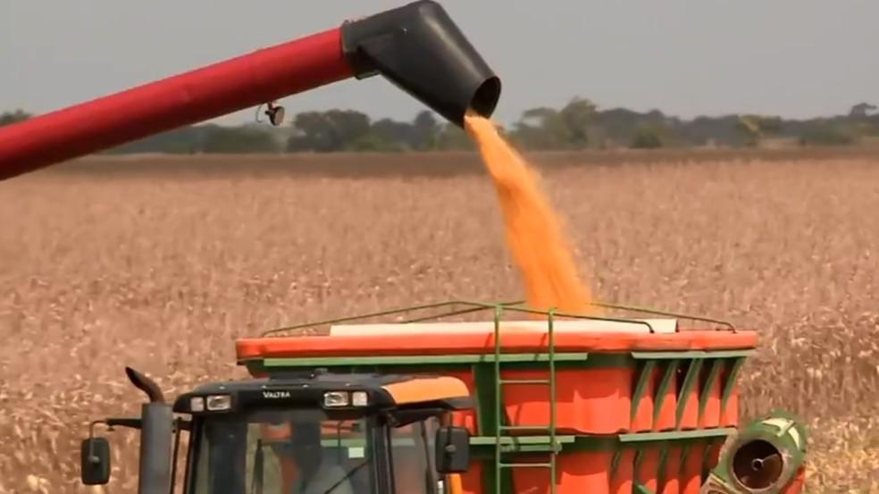 Exportação de milho vem batendo recordes em agosto de 2019