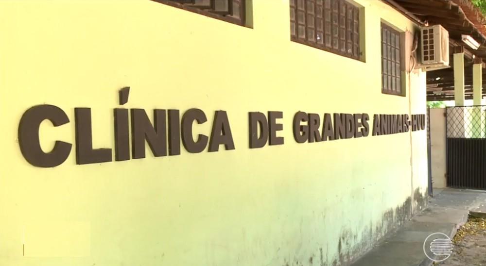 Parque de Exposição Dirceu Arcoverde é interditado após identificar cavalo com doença contagiosa