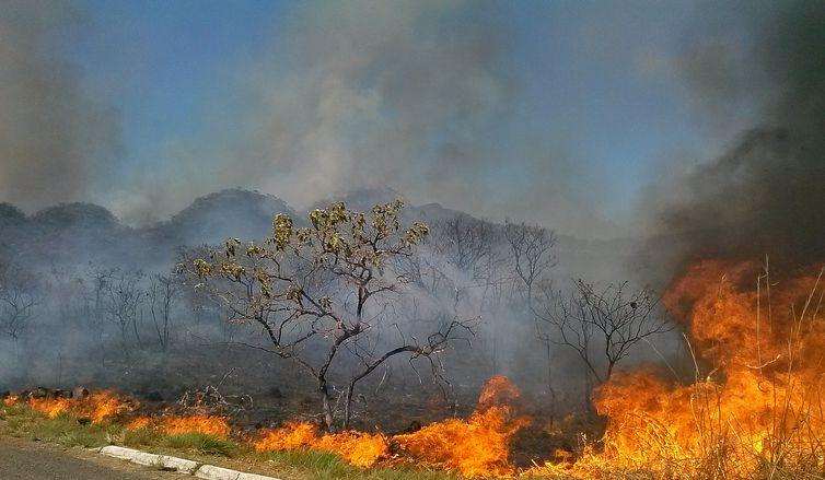 Incêndios no Centro-Oeste causam prejuízos milionários para produtores rurais