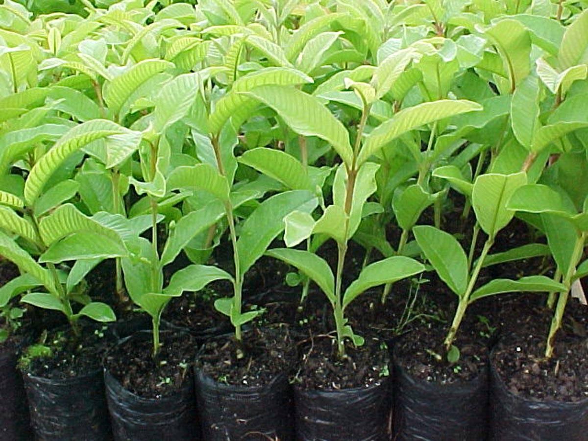 Mudas de plantas serão entregues após pedido online