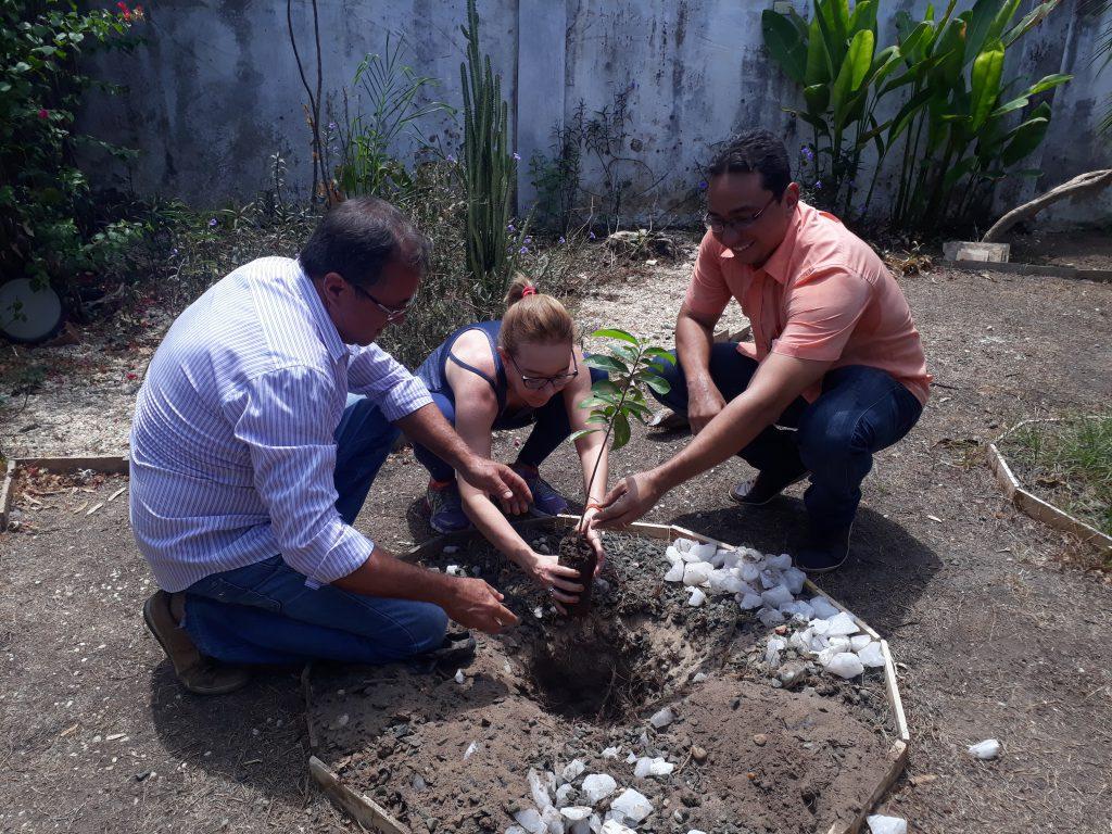 Projeto oferece distribuição de mudas de árvores à domicílio e ajuda no plantio