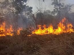 Aprenda as diferenças entre queimadas, incêndios florestais e foco de calor