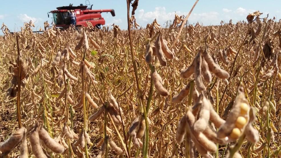 Governo prevê recorde para a nova safra de grãos do país
