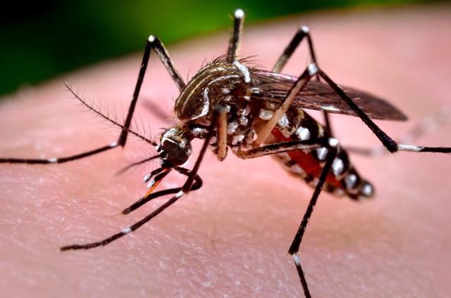 Pesquisa indica baixo risco de infestação de Aedes aegypti em Teresina