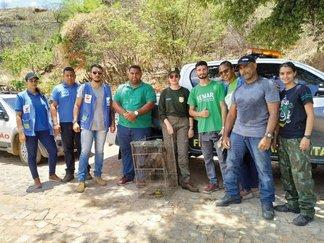 Animais silvestres foram recolhidos após entrega voluntária em Oeiras (PI)
