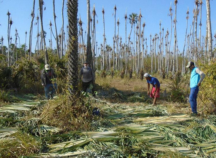Seis empregadores no Piauí são acusados de trabalho escravo