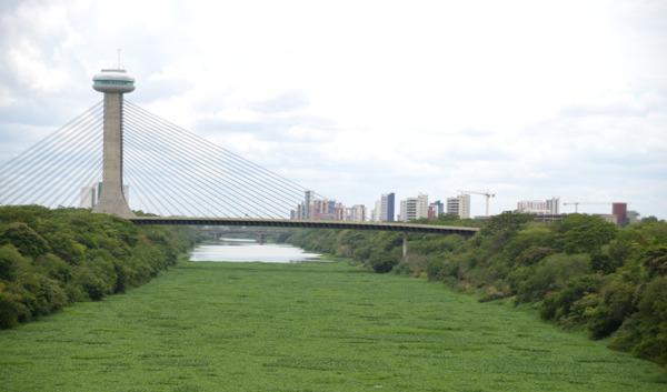 Aguapés do Rio Poti serão retirados nos próximos dias como medida estratégica da Semam