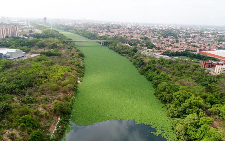 Secretária de Meio Ambiente anuncia força tarefa para retirar aguapés do Rio Poti