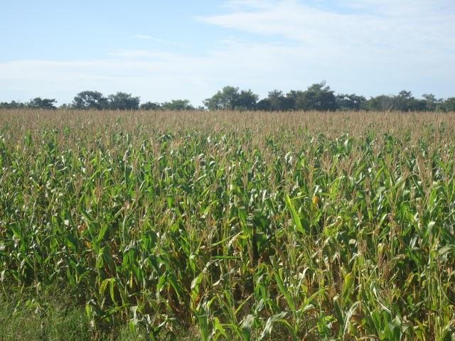 Valor Bruto da Produção Agropecuária de 2019 pode chegar a R$ 609,5 bilhões, diz Ministério da Agricultura