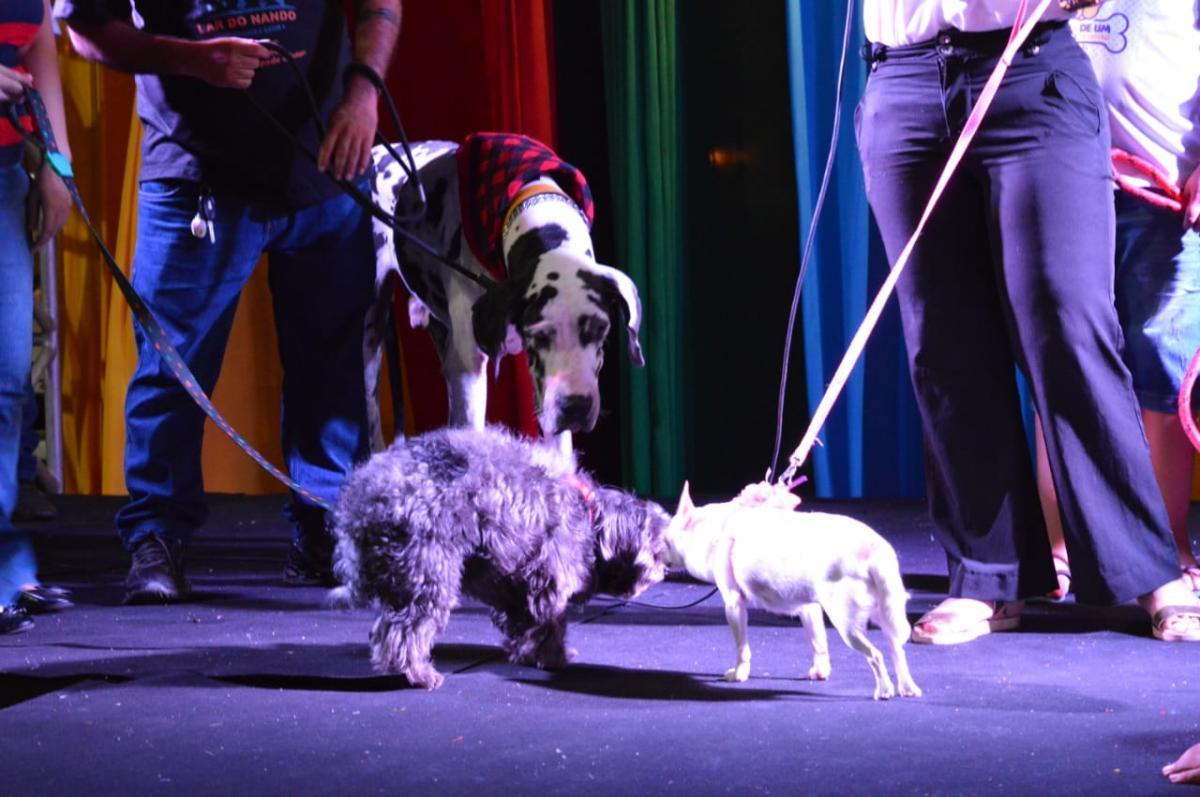 Concurso Pet: Confira os cachorrinhos que são mais parecidos com seus donos