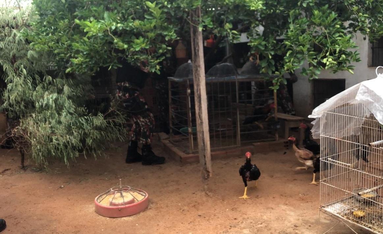 Polícia Ambiental apreende mais de 20 galos que sofriam maus-tratos no Promorar