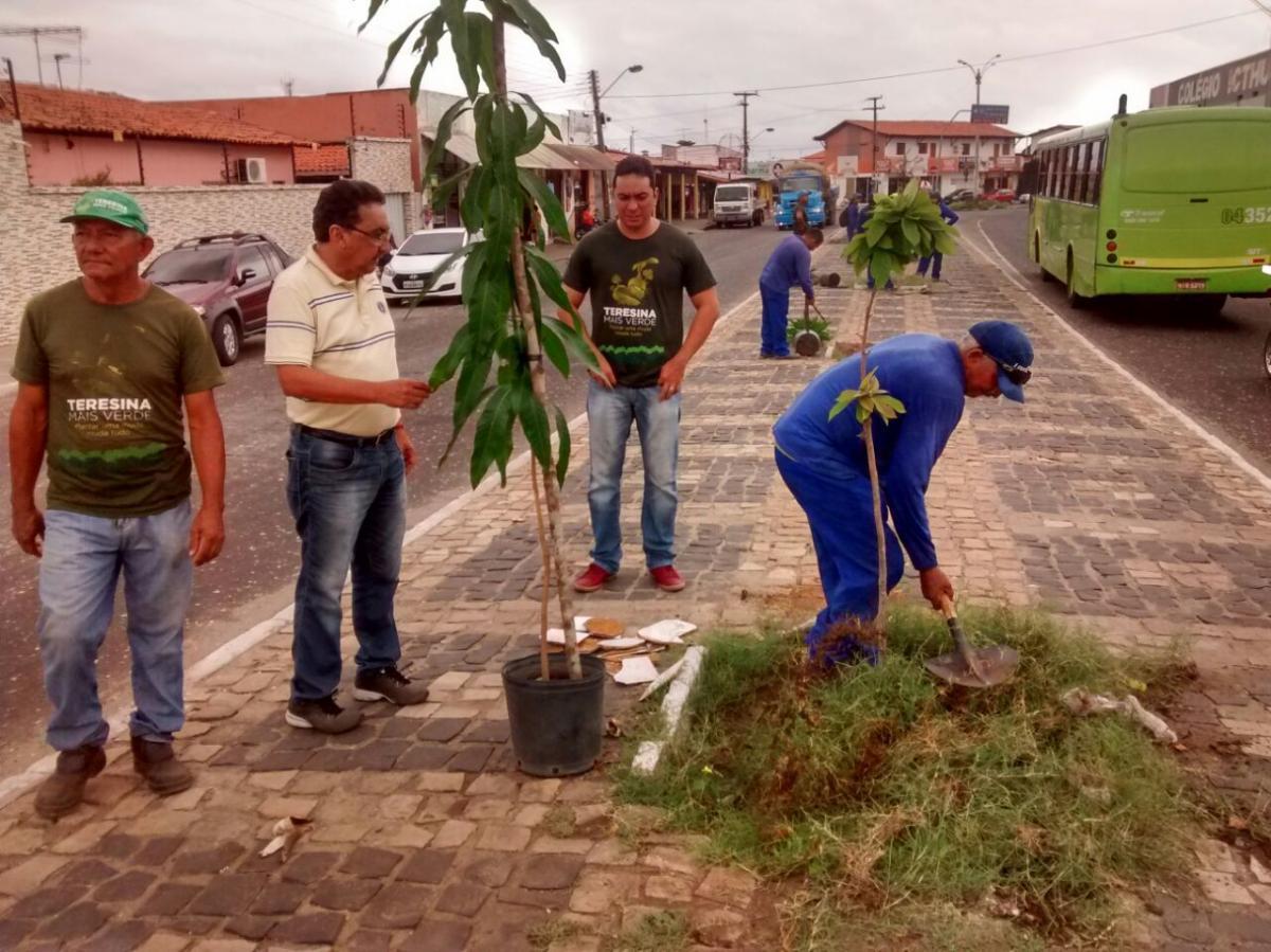 Projeto Teresina Mais Verde distribui mudas de plantas gratuitamente