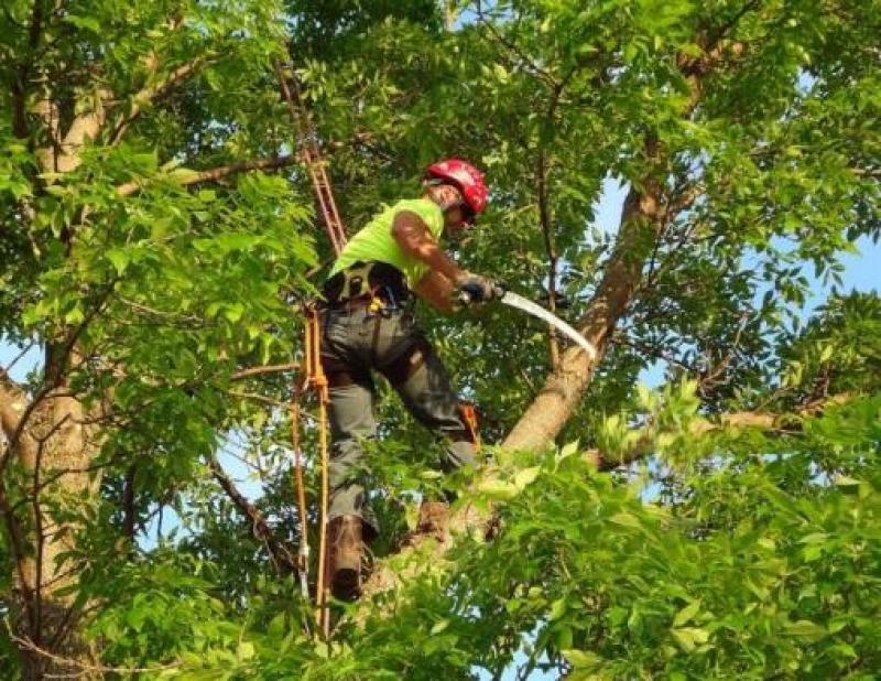 SDU Centro Norte faz podas em árvores para evitar acidentes