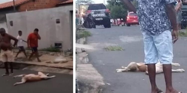 Cães são mortos a tiros durante ação policial na Zona Norte de Teresina