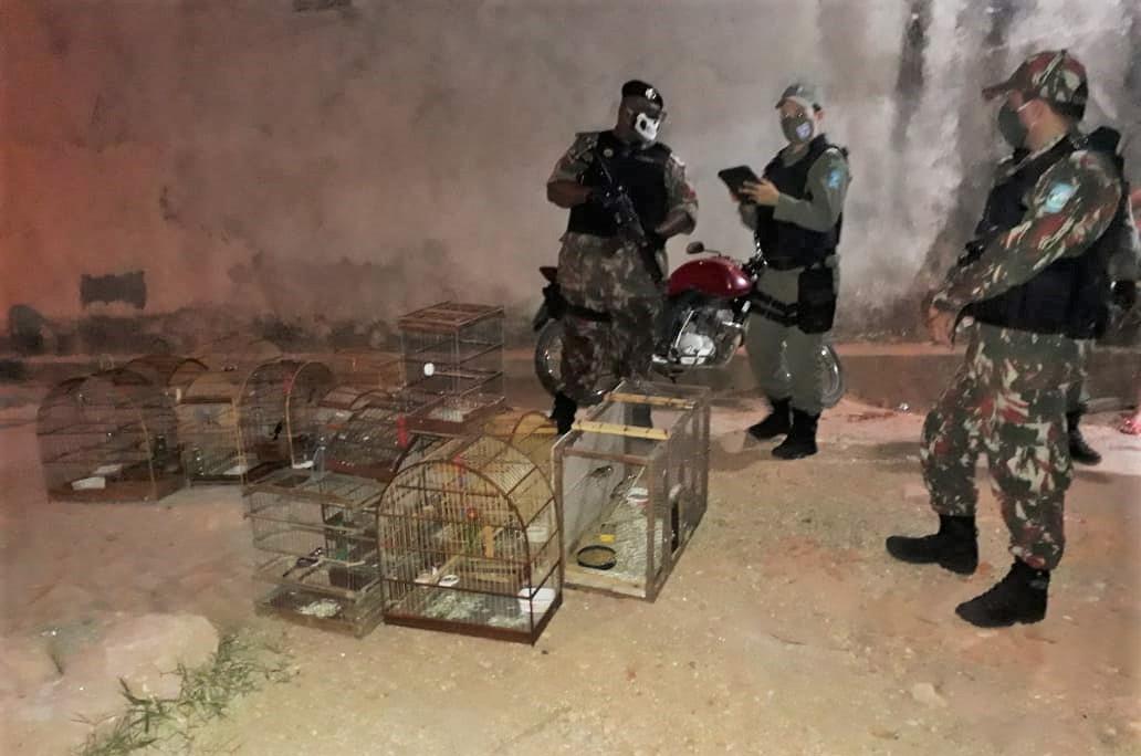 Polícia Ambiental apreende aves durante operação em Teresina