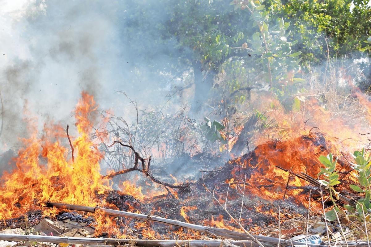 Órgãos trabalham em conjunto no combate às queimadas no Piauí