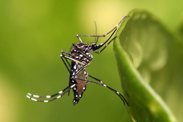 Piauí aponta redução de casos de chikungunya e dengue