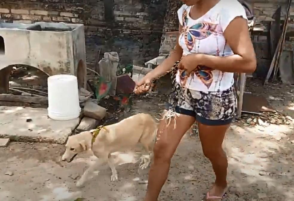 Homem é preso suspeito de abuso contra sua cadela no Piauí