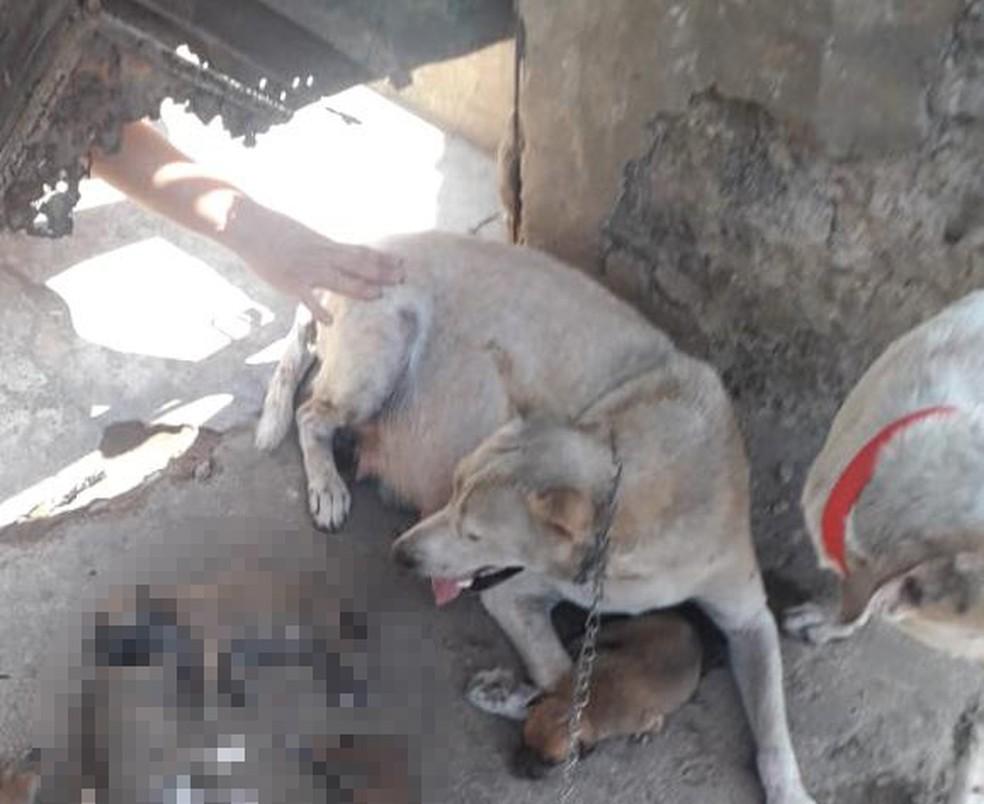 Mulher acusada de matar filhotes de cachorro é denunciada à Justiça em Teresina