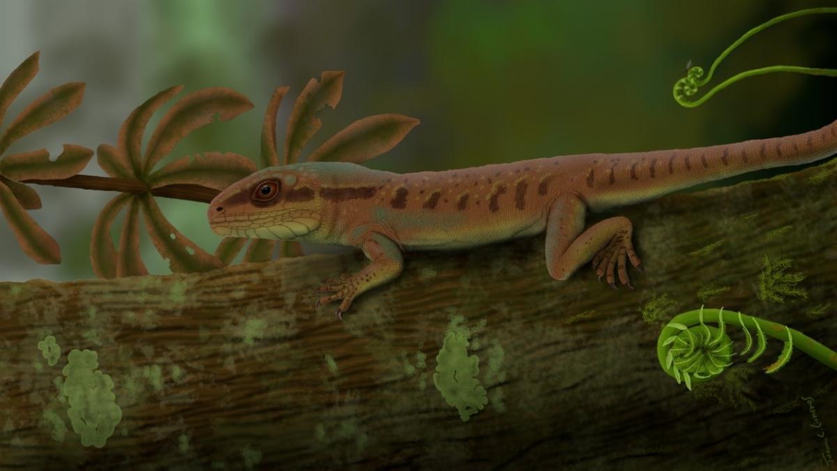 Pesquisa inédita da UFPI descobre nova espécie de réptil da Era Paleozoica em Nazária